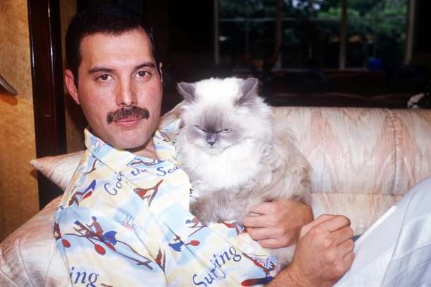 http://vev.ru/uploads/images/00/03/07/2013/09/04/freddie-mercury-with-cat1.jpg