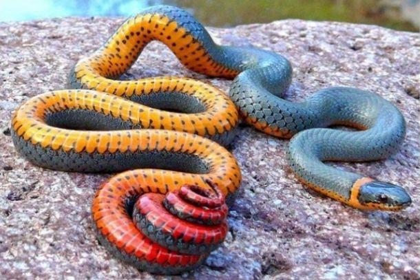 Секс змея threads