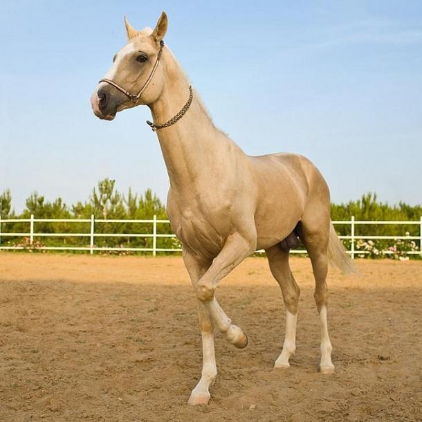 Картинки лошадей и коней