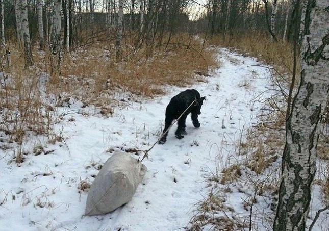 Мусор сортируется, и Лимон уносит его по ледяной дорожке на свалку.