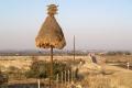 Гнездо африканского ткача