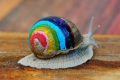 painted-snail-shell-9