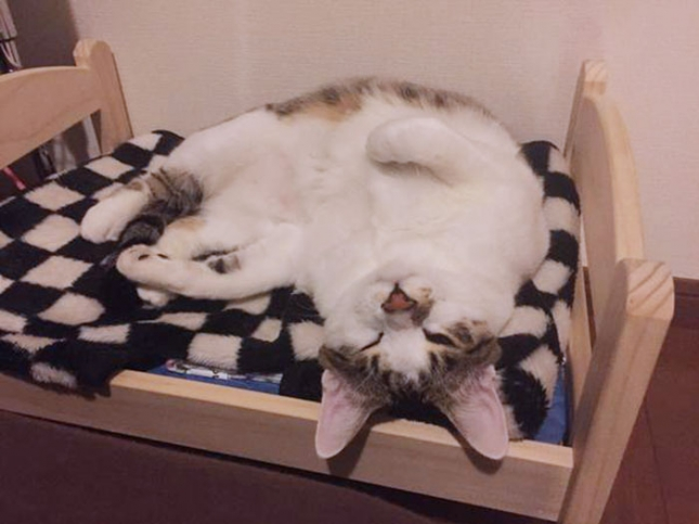 ikea-duktig-bed-hack-cat-bed-13