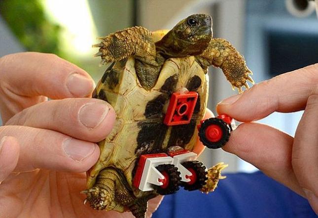 черепаха3