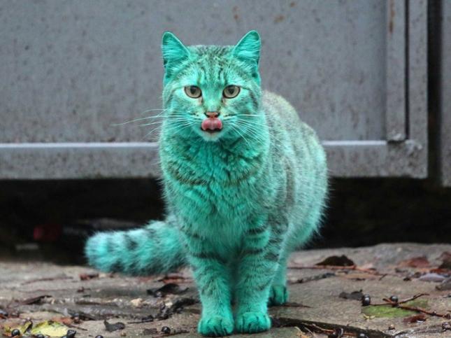 Изумрудный котик