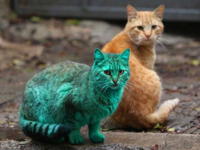 Изумрудный котик2