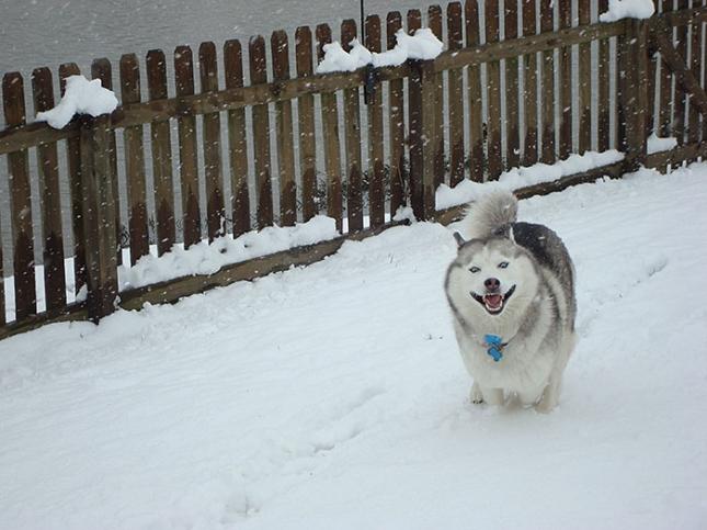 Ай да зима!