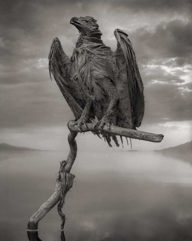 nick-brandt-calcified-fish-eagle-lake-natron