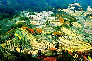 terraced-rice-fields-26__880-314x209