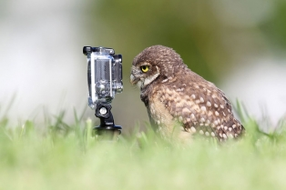 animals-getting-cozy-with-camera-gear-owl2__880