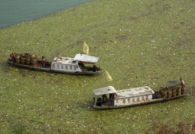 Ликвидация плавучего мусора на реке Янцзы