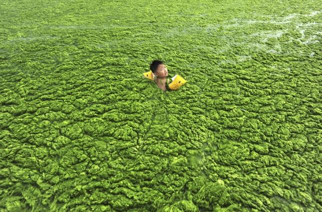 Мальчик плавает в водорослях на окраине Кингдао