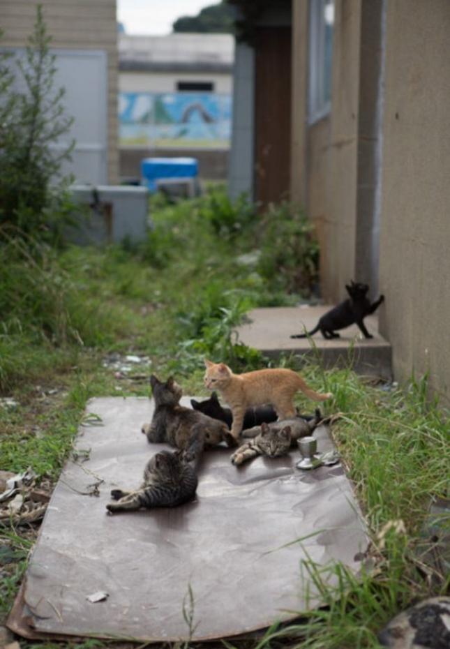 o-CAT-570-11-505x757