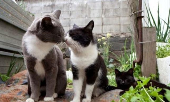 o-CAT-570-14-505x335