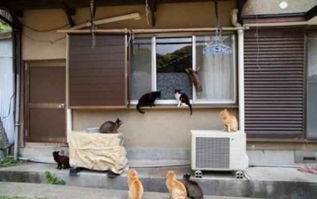 o-CAT-570-3-505x335