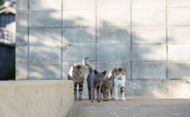 o-CAT-570-5-505x335