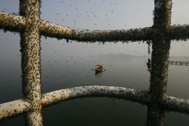 Полчища мух на пристани возле грязного озера в провинции Ухань