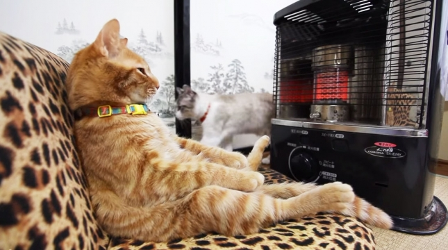 2-Cat-Sitting-By-Heater1