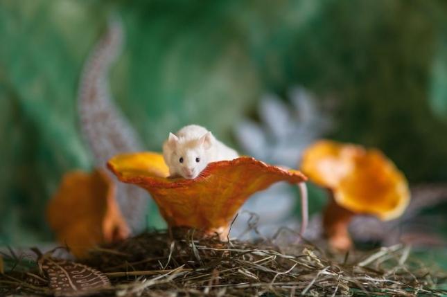 Кто там на грибе? Джузеппе России был выкуплен благотворительной организацией, в противном случае после завершения лабораторных исследований мышонка должны был усыпить.