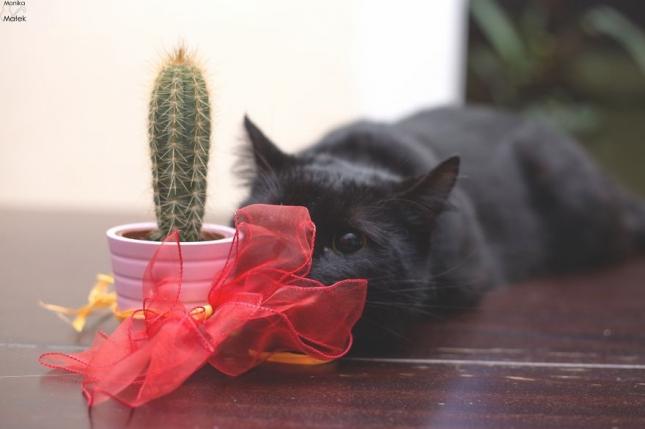 Если вы дадите кому-то кактус, это принесет им страдания