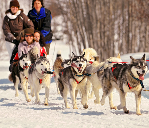 Go-Dogsledding