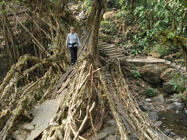 incredible_tangled_root_bridges_640_01