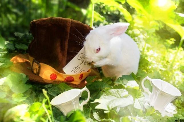 Безумное чаепетие. Индиана Джейн настолько маленькая, что попросту выпала из грузовика, везущего кроликов на бойню. ее подобрали и приютили.