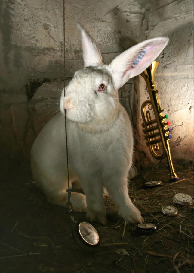 Ах, мои ушки! Консоль Марчелло - лабораторный кролик номер такой-то. татуировка на ушке заменяла ему имя. Он ищет любящих хозяев.