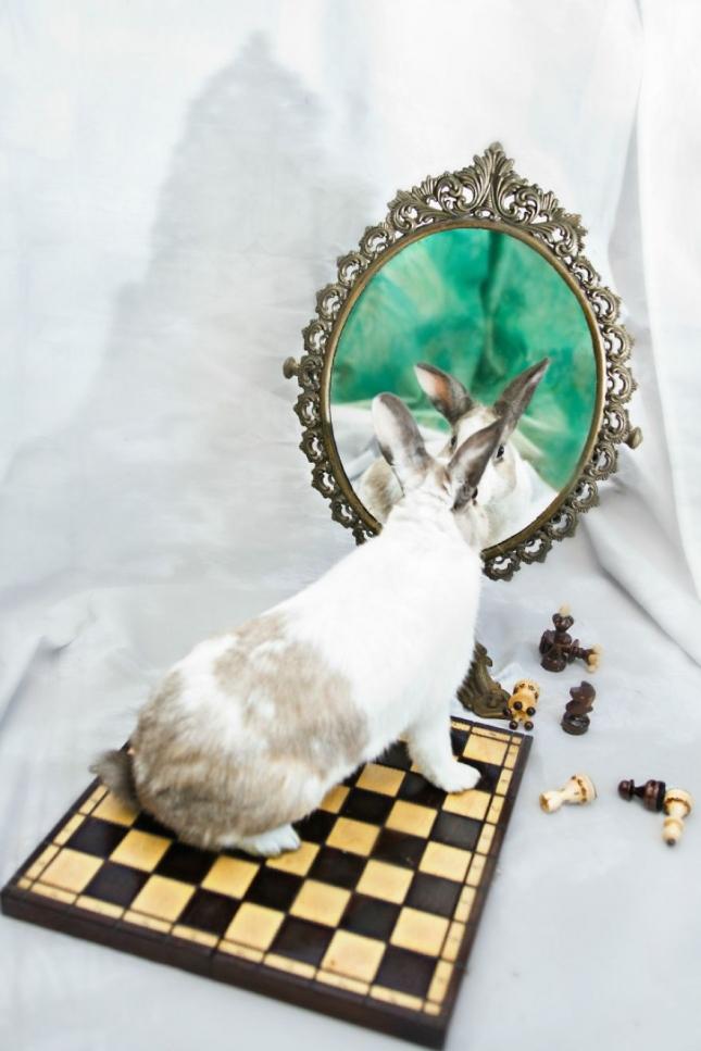 Зазеркалье. Кролика Нило замучили исследованиями, и у него отказали ножки. Но добровольцы вылечили его и теперь он снова прыгает.