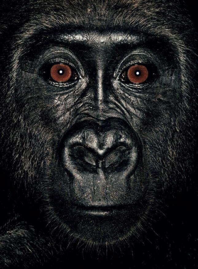 Ликендзе — четырехлетняя самка гориллы. Родилась в Конго. Ее родителей убили браконьеры, а саму обезьяну повезли на черный рынок. Спасена сотрудниками Министерства охраны окружающей среды. Живет в приюте и учится заново осваивать мир, поскольку кроме клетки ничего не видела, а следовательно, ничего не умеет делать нормально. Даже есть.
