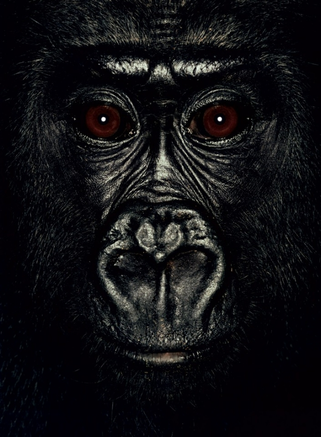 Матоко, самка гориллы, в свои 4 года проживает в приюте в Конго. Также была спасена из недобрых рук торговцев животными. Была спасена во время облавы на браконьеров, которую проводило Министерство охраны окружающей среды.