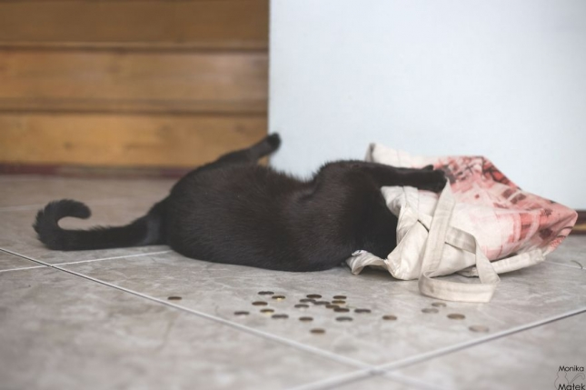 Не кладите сумку на пол, чтобы ваши деньги не убежали из вашего кошелька