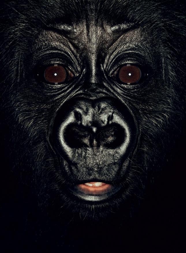 Нкану, самцу гориллы, исполнилось шесть месяцев, родился он в Камеруне, где его родителей убили торговцы мясом экзотических животных. В двухнедельном возрасте малыша нашли в обозе, в котором нелегально пытались отправить партию обезьян на бойню. Торговка в Яунде была вынуждена отдать Нкана и других малышей в Фонд защиты диких животных в Бастосе (Камерун).