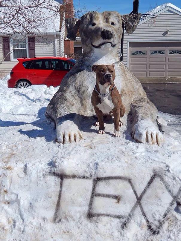 pet-snow-sculptures-5__605