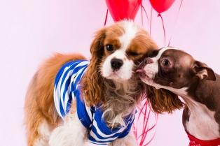 Puppy-Love-Balloons-Kiss