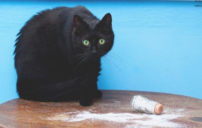 Рассыпанная соль приводит к ссорам