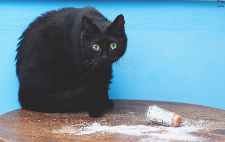 Черная кошка почему плохая примета