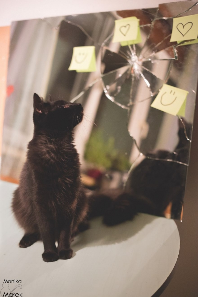 Разбитое зеркало - 7 лет несчастий