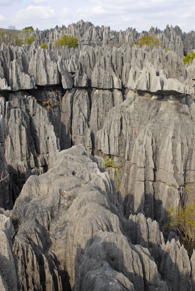 """""""Каменный лес""""  - Мадагаскар"""