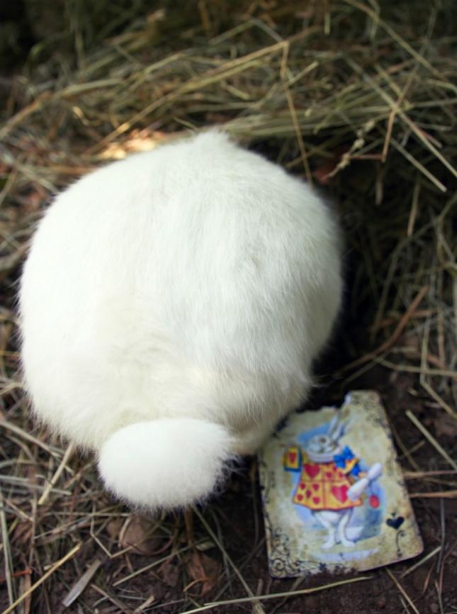 Вперед за белым кроликом!
