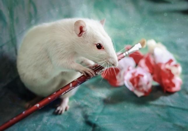 Дивная музыка на королевском крокете. Знаете ли вы, что крысы великие знатоки прекрасного?