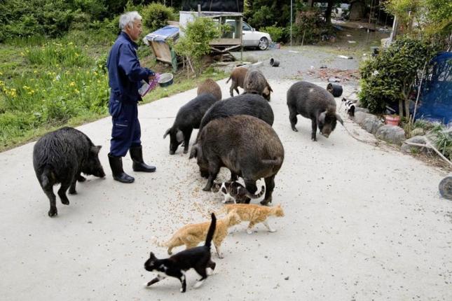 fukushima-radioactive-disaster-abandoned-animal-guardian-naoto-matsumura-14