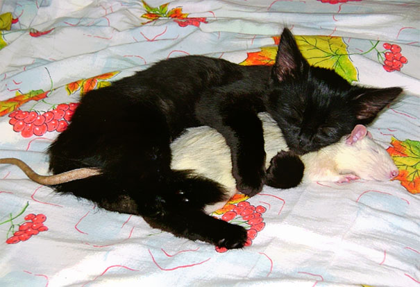 Кот и крыска