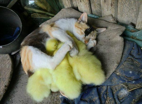 Кошка с птенцами