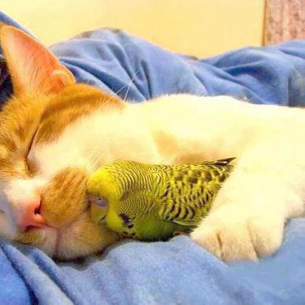 Котик и попугай