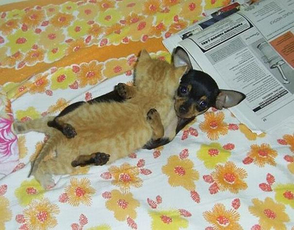 Котишка и щенок