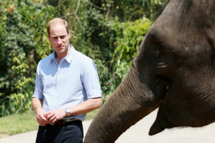prince-william-meets-locals-rescued-elephant-04