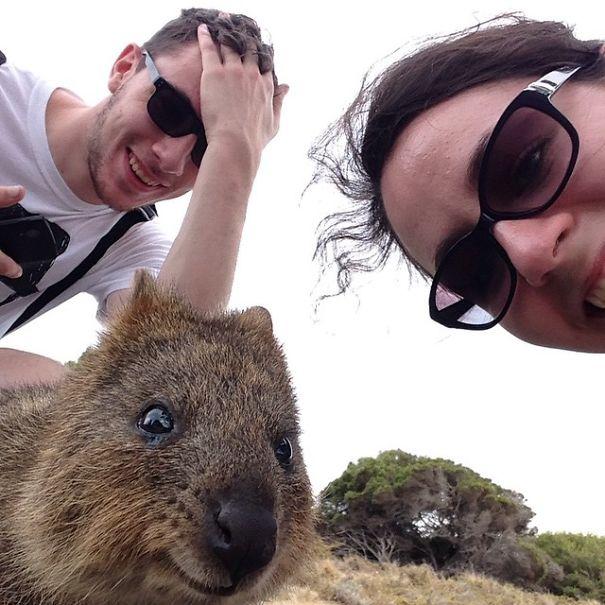 quokka-selfie-trend-cute-rodent-australia-14__605