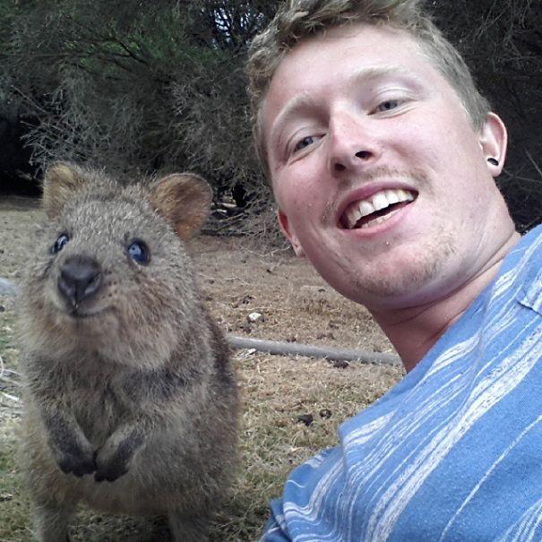 quokka-selfie-trend-cute-rodent-australia-3__605