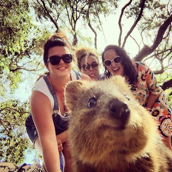 quokka-selfie-trend-cute-rodent-australia-7__605